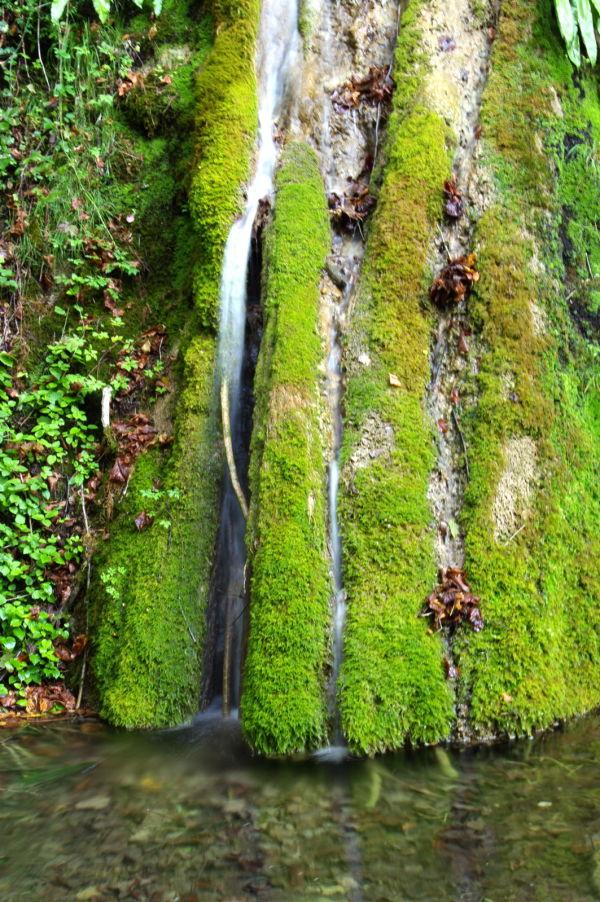 eau vert forêt