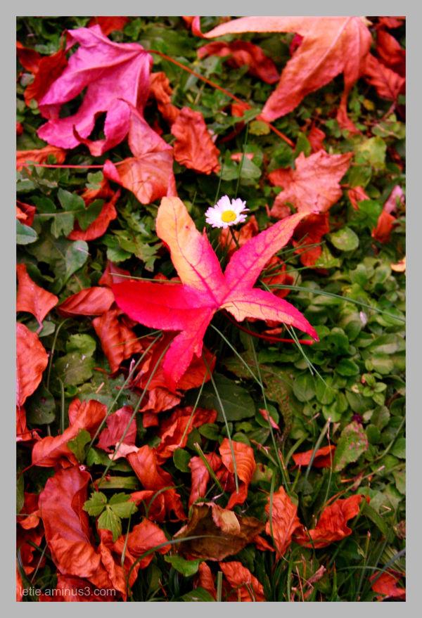 un mois de novembre heureux en couleurs