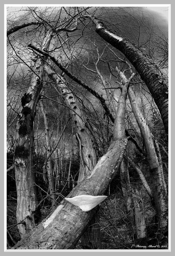 La danse des arbres