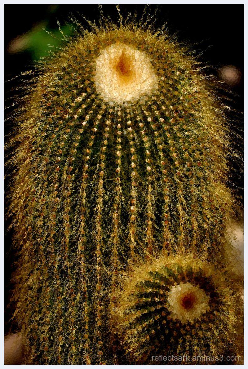 Paint a Cactus!
