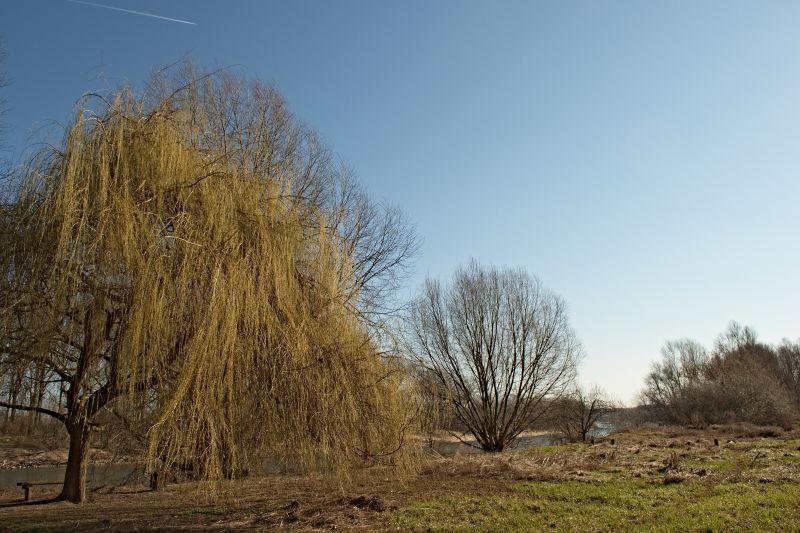 Ripuarian landscape 1