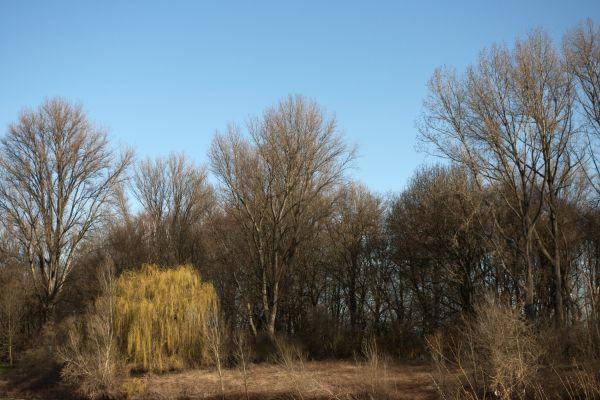 Ripuarian landscape 2