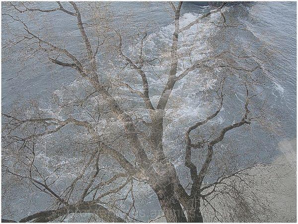 un montage arbre et eau