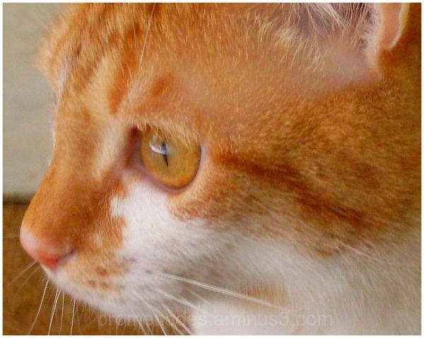 gros plan d'un jeune chat