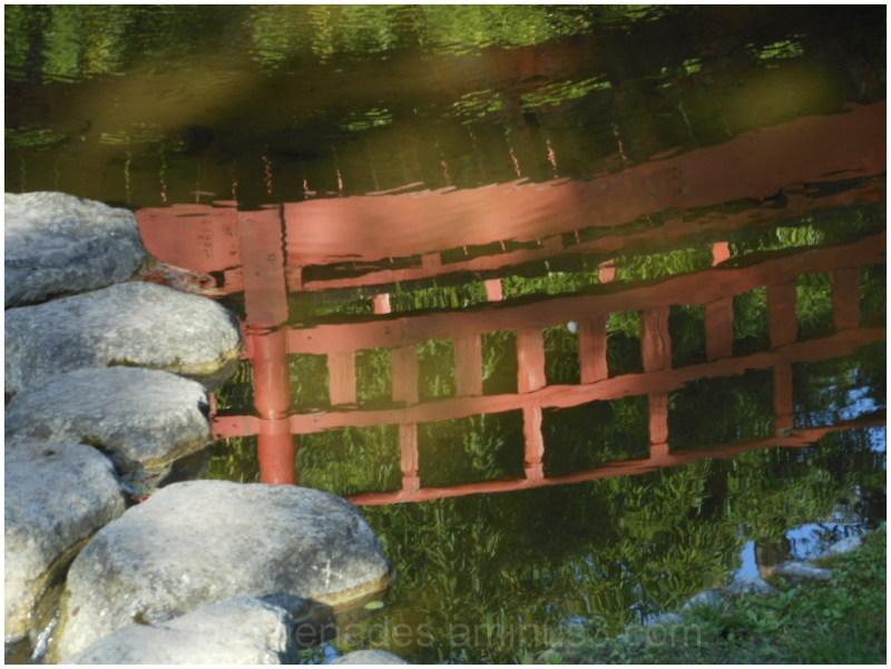 reflet dans le jardin Albert Kahn