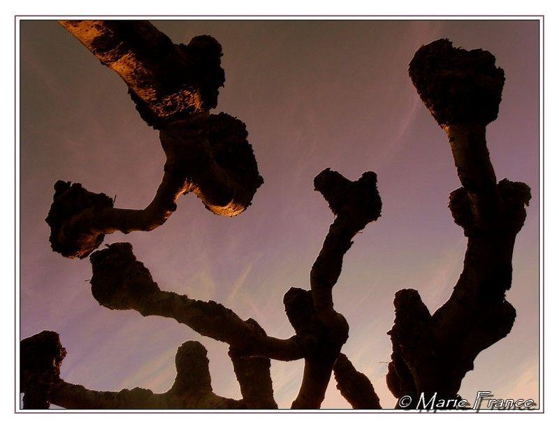 Branches d'arbres élaguées