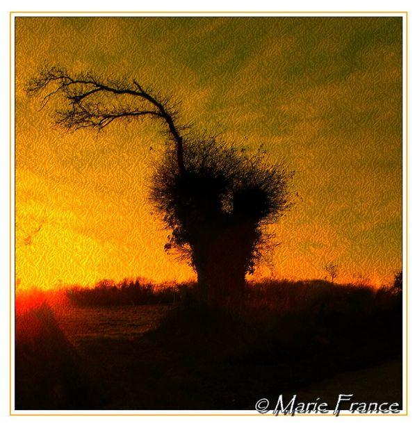 arbre sur fond orangé