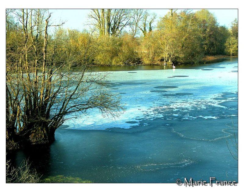 Une bouère gelée en Anjou