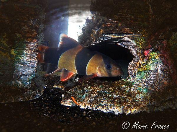 poisson dans un aquarium