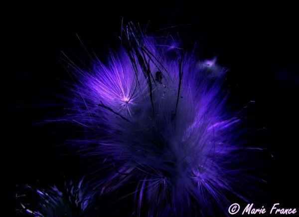 graines de fleurs sauvages