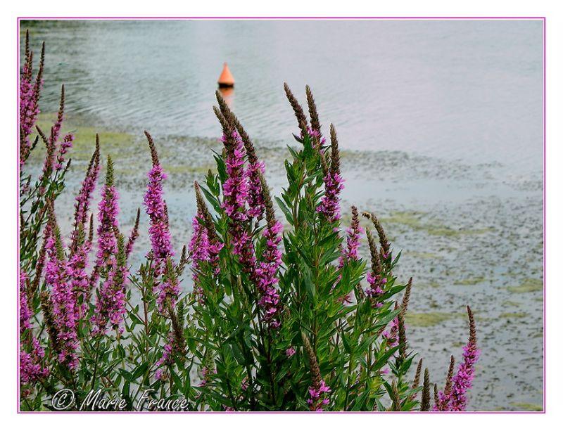 fleurs en bordure de rivière