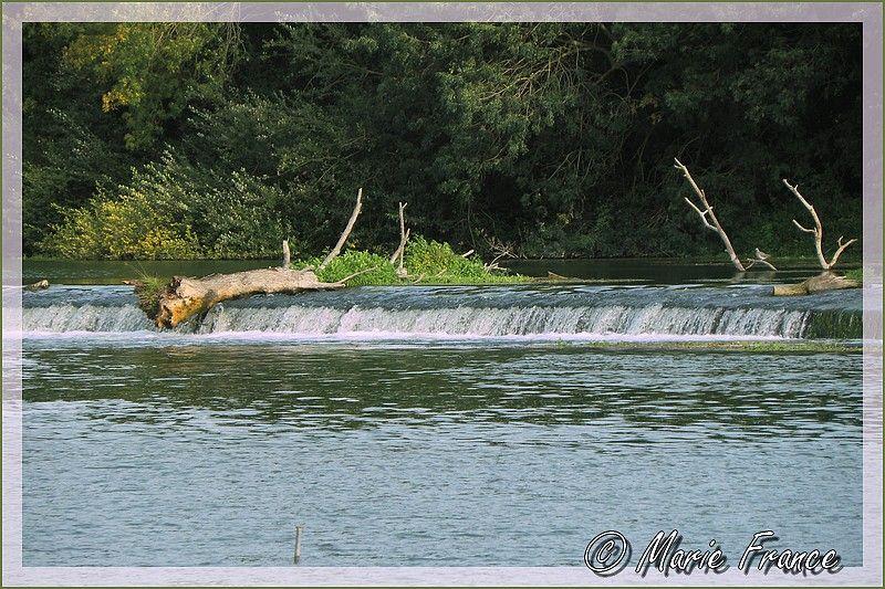Tronc d'arbre sur un barrage