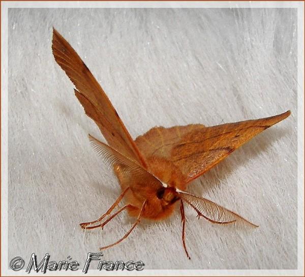 papillon sur un lit