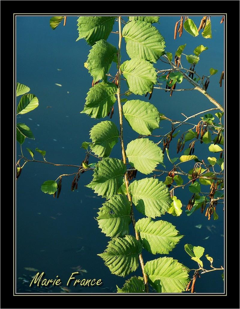 Branche d'arbuste