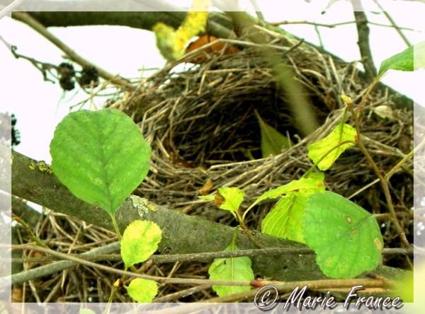 nid vide au creux des branches