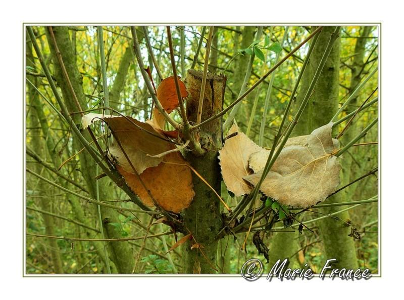 feuilles tombées au creux d'une branche