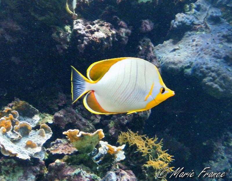 Poisson dans un aquarium à Brest