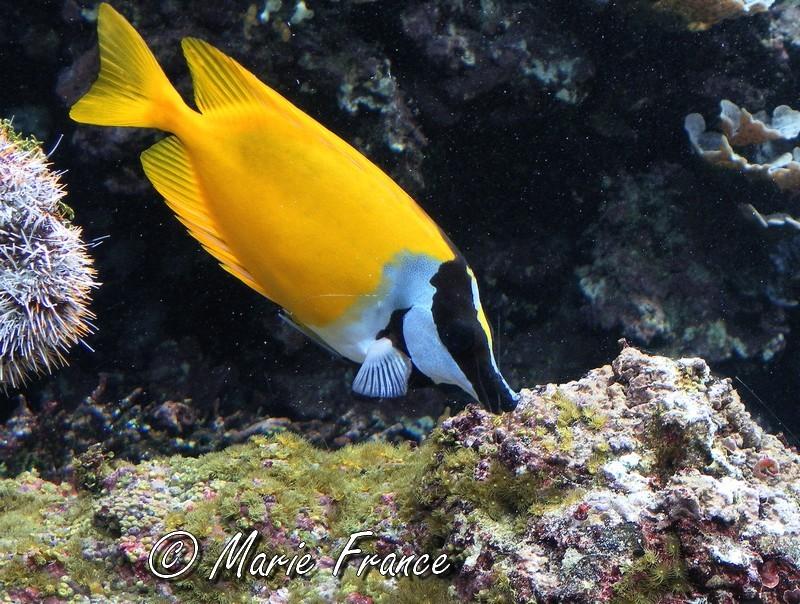 poisson exotique à Brest