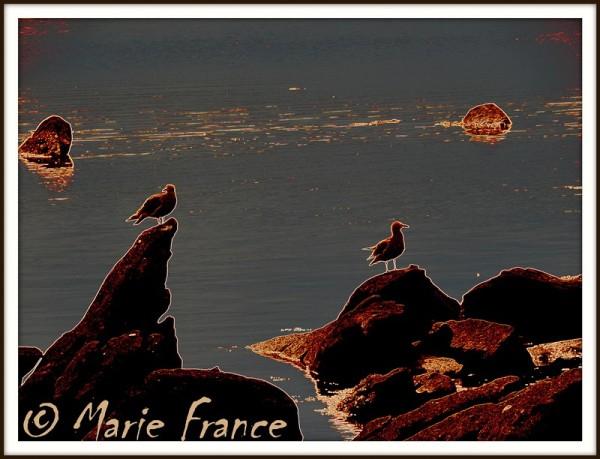 Des effets  sur une photo de goélands sur rochers