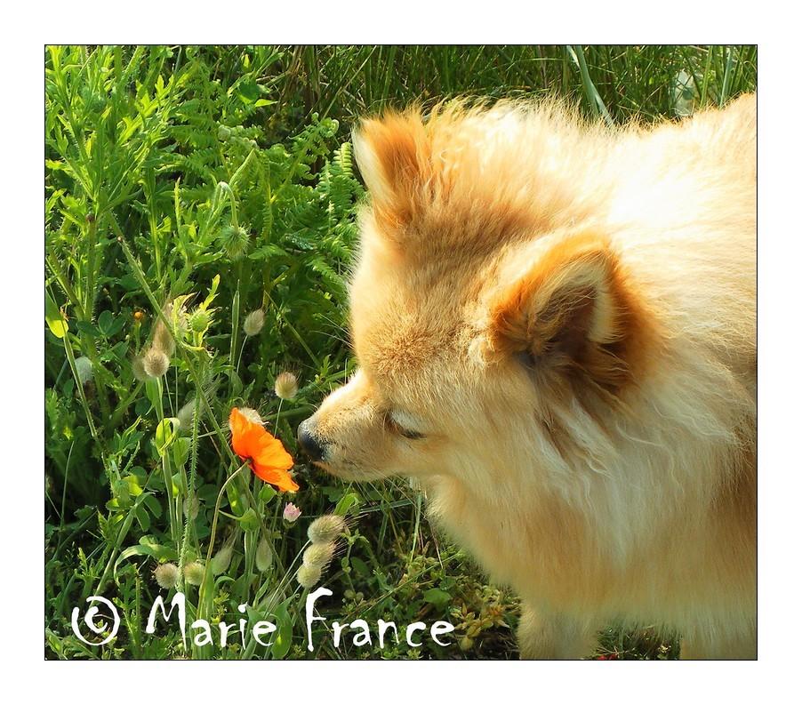 chien humant une fleur