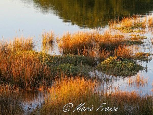 marais en Bretagne