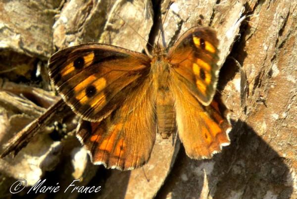 papillon sur tun tronc
