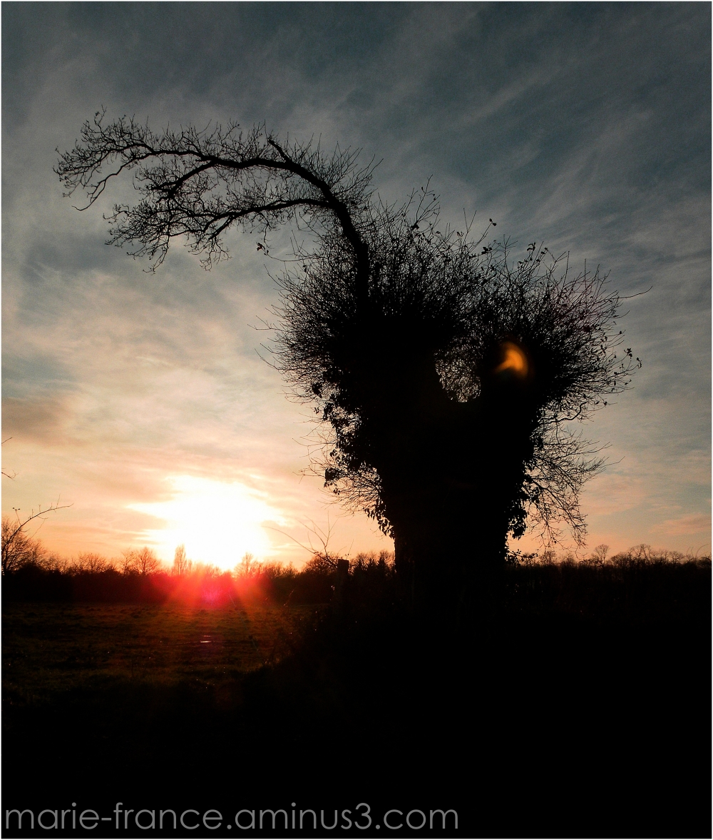 arbre en contre jour, dans rayons du soleil