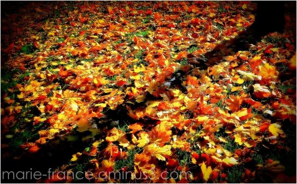feuilles mortes soleil et ombre