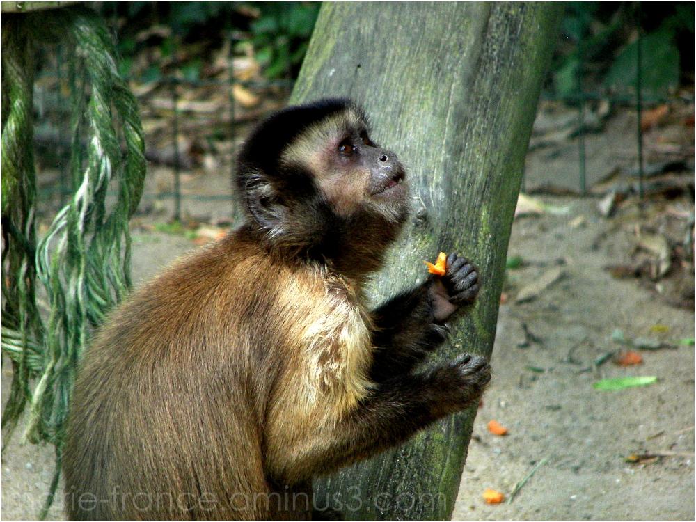singe dans un parc animalier
