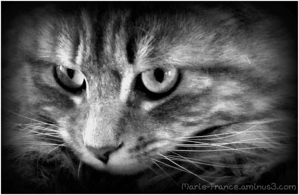gros plan sur un chat...