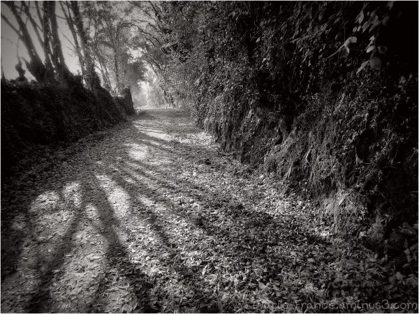 Chemin des chalets à Angers