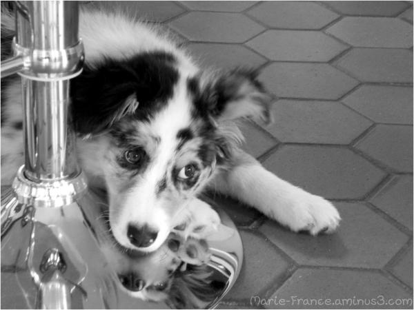 chien sur un socle de tabouret en inox