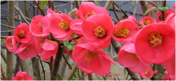 branche fleurie