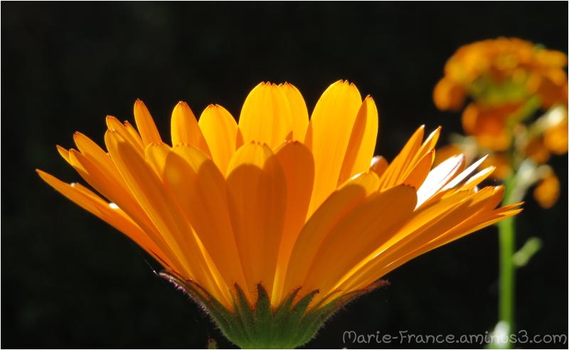 fleur dans le soleil...