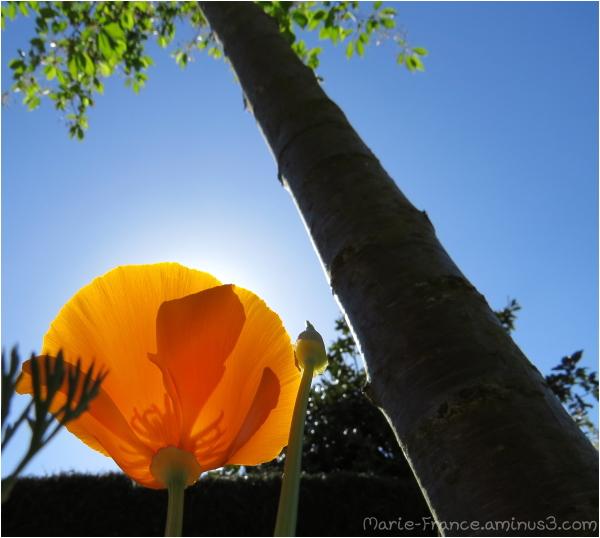 Fleur dans le soleil