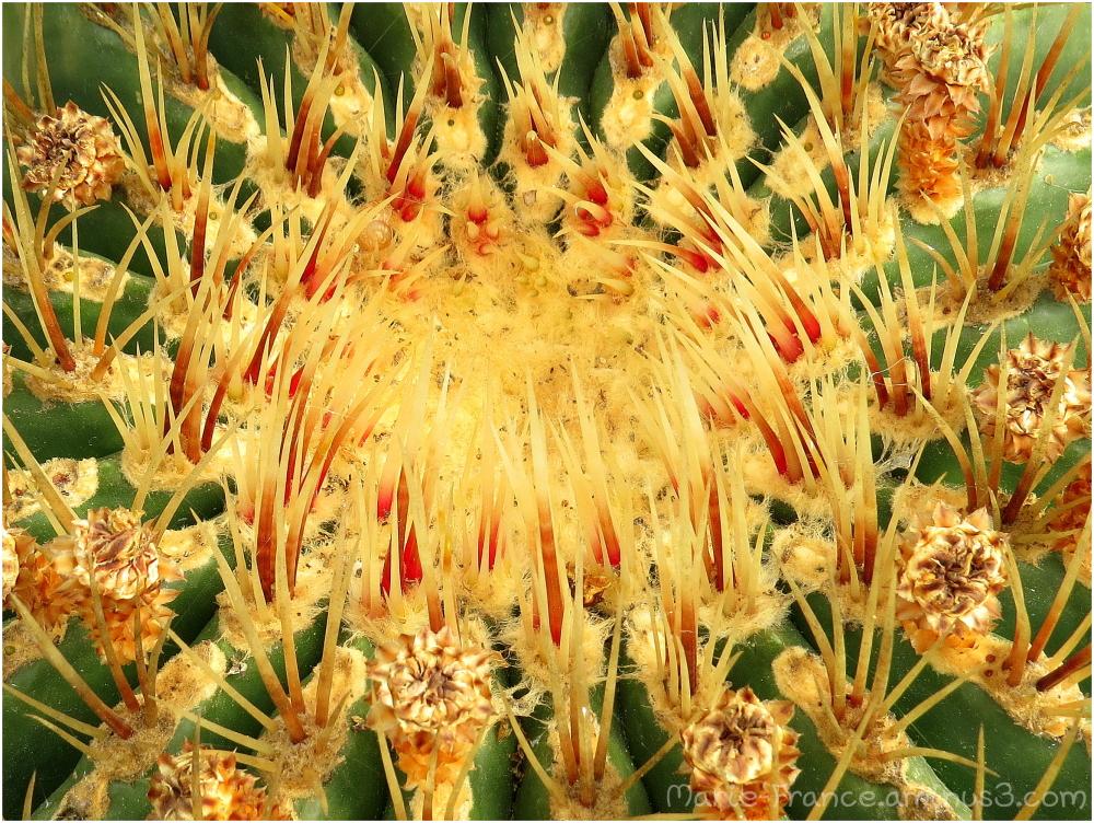 Plante du jardin exotique de Roscoff