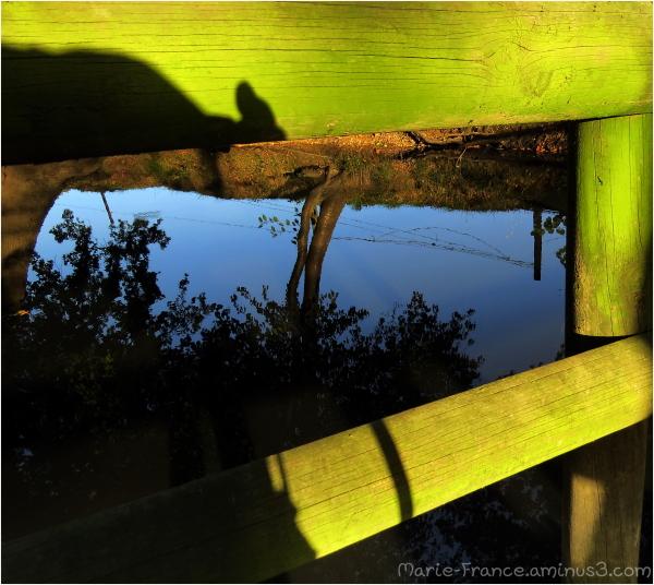 reflets, nature