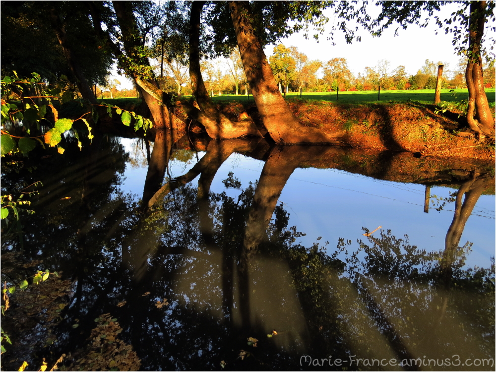 reflets au parc de L'isle Briant au Lion d'Angers