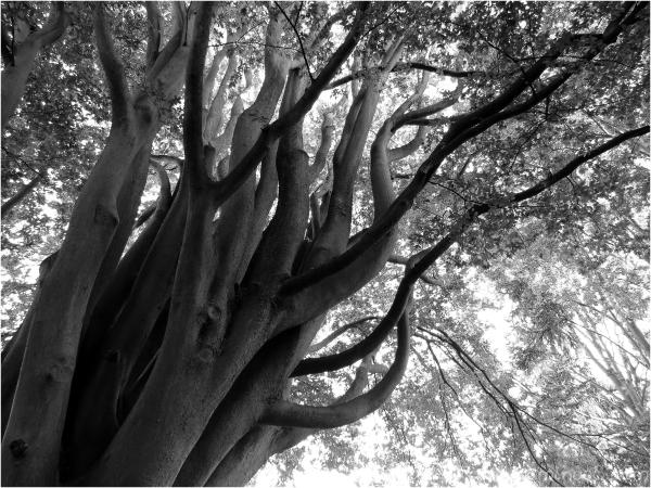 """""""L'arbre remarquable"""""""
