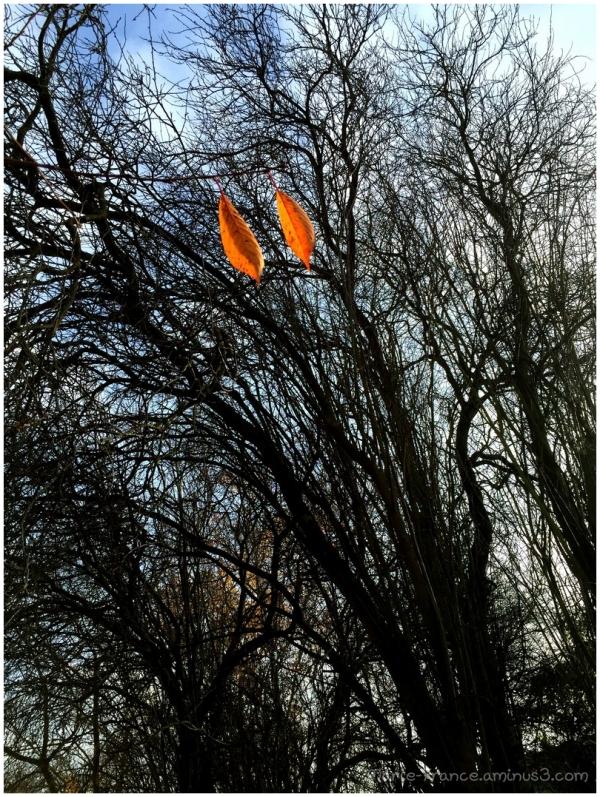 deux feuilles restant seules parmi des arbres nus.