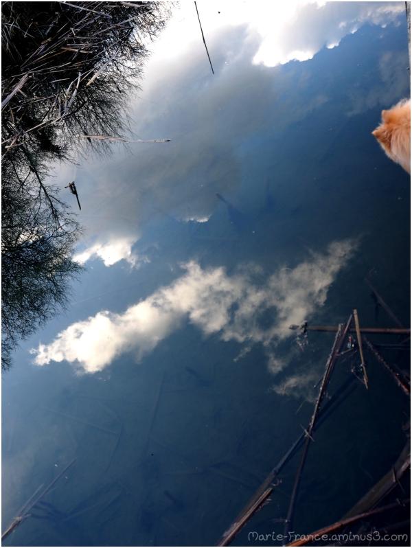 reflets du ciel dans des marais...