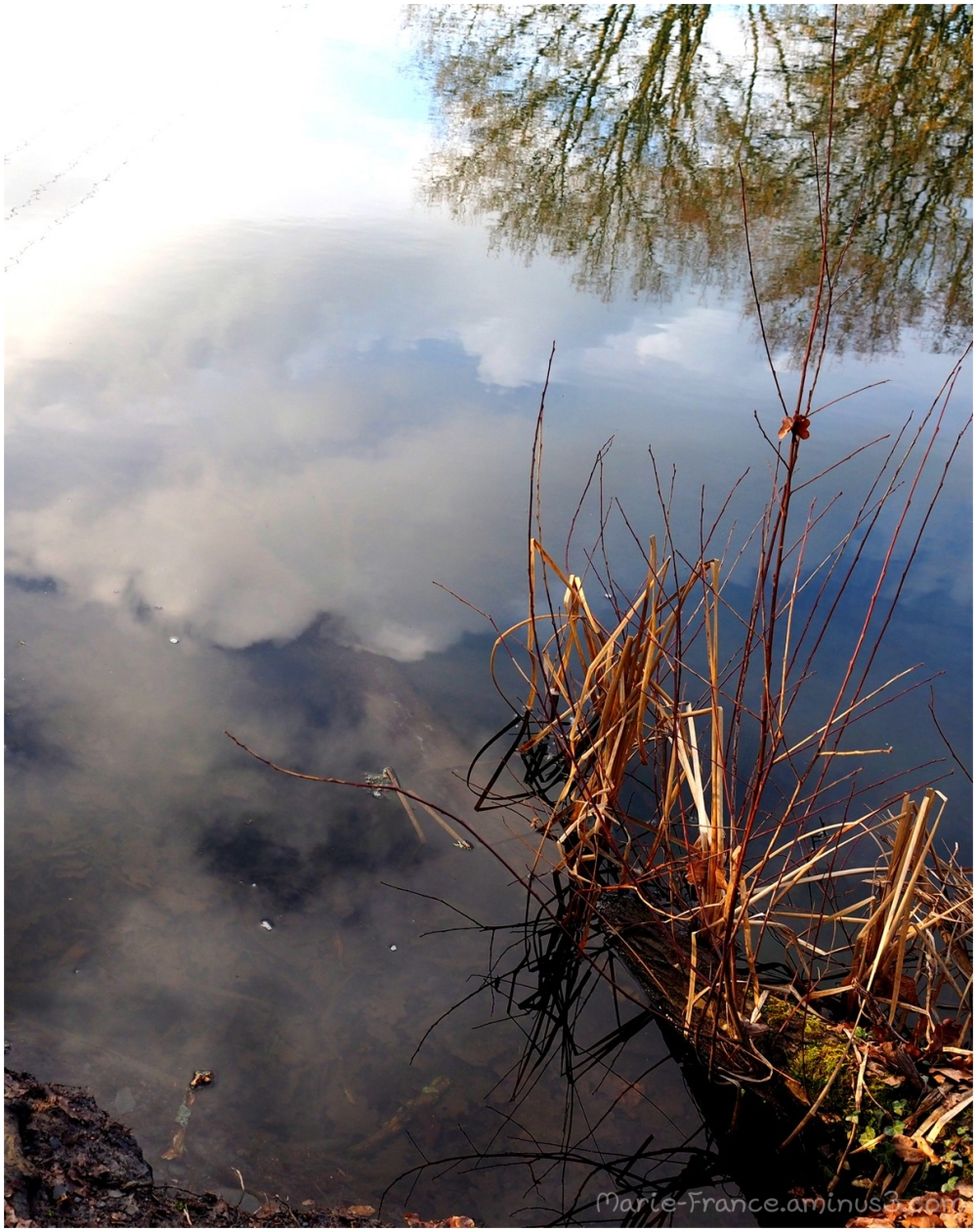 Herbes en bordure d'eau...reflets...