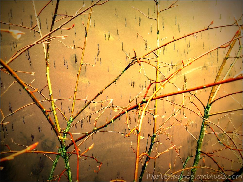 buissons en hiver sous la pluie
