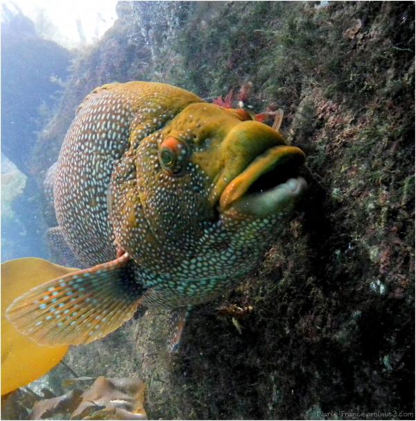 A l'aquarium de Brest