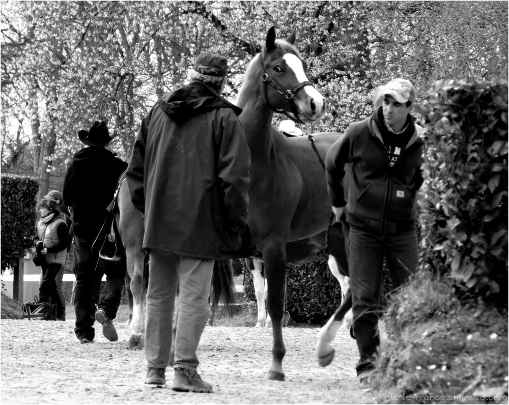 Un cheval et son lad