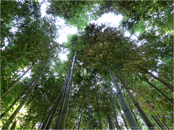 Au coeur des bambous à Angers