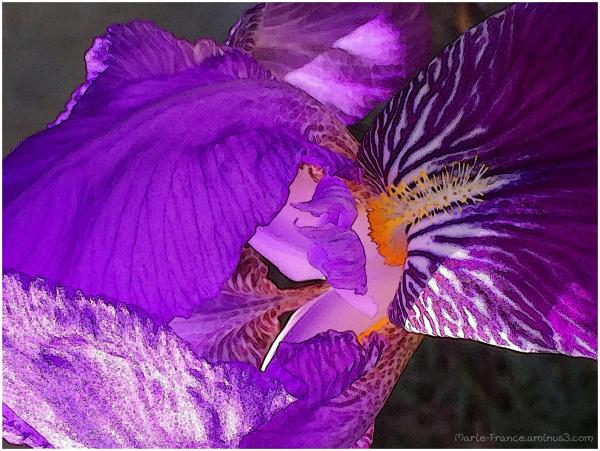 Iris....ation