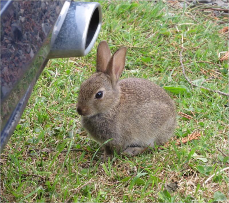 Mettez un lapin dans votre moteur !