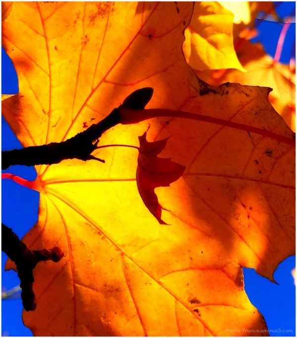 feuillse d'automnes