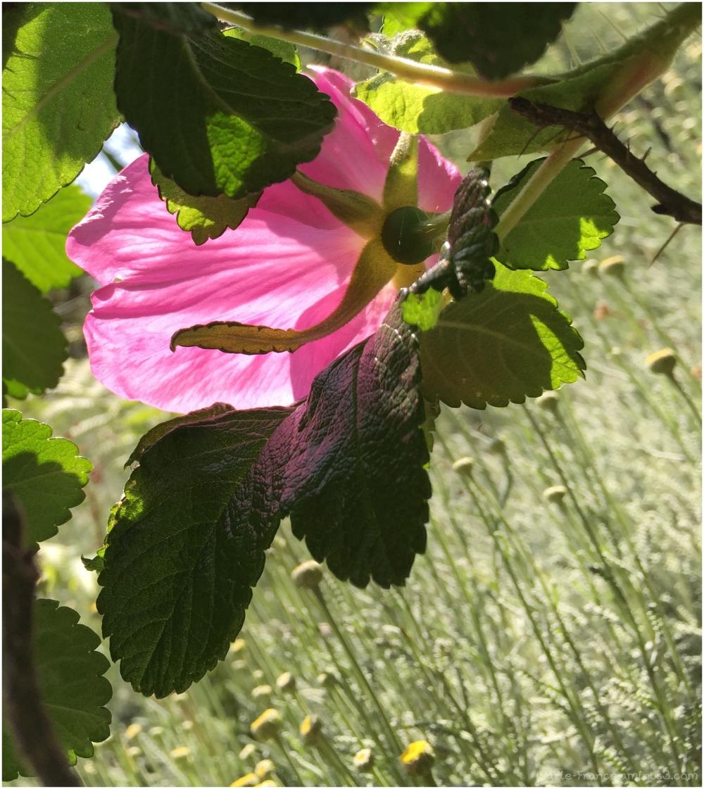 le dos d'une fleur dans le soleil
